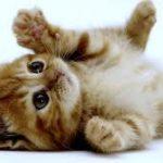 -Il gatto che verrà-